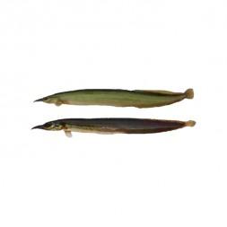 Baim Fish Medium