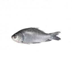 Catla (Katla) Fish After Cutting (Net Weight ±50 gm)