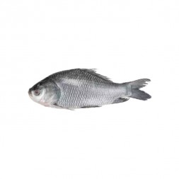 Catla (Katla) Fish (Net Weight ± 50 gm)